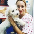 Cabinet veterinar BLUE POINT VET Bucuresti
