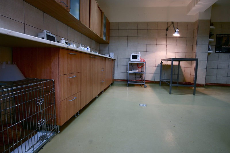 EqvineVet - clinica veterinara Bucuresti