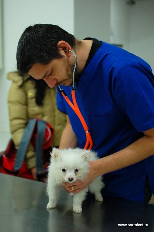 Cabinet veterinar Sarmivet