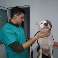 Medic veterinar Catalin Mitra.jpg
